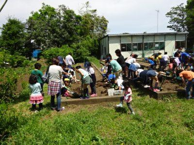 学校ファーム夏野菜苗植え 池づくり(エコクラブ)