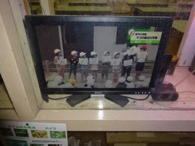 2年生のヤゴ救出大作戦がJCOMテレビで放映されました