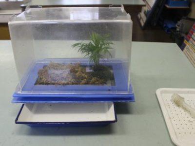 安行小の夏 ホタルの幼虫が産まれました 7月29日(月)