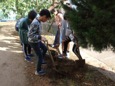 卒業記念樹を植樹しました 1月17日(金)