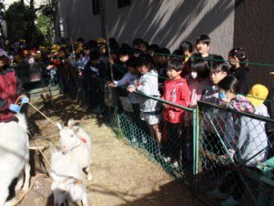 ヤギ ミルク マカロンとのお別れ…そして新しいヤギが安行小にやってきました! 2月10日(月)