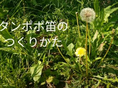 たんぽぽ笛をつくろう!(On-lineエコクラブ)