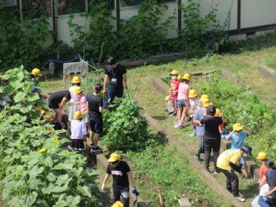 なかよし学級ジャガイモ掘り&ナスの収穫 6月26日(金)