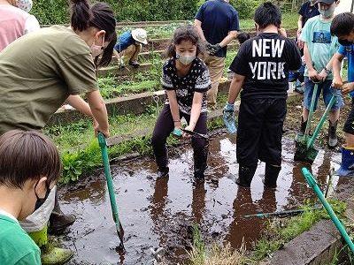 サツマイモ苗植え 田植え クワの実ジャム 6月7日(日)エコクラブ