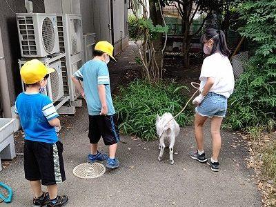 ヤギさん散歩(飼育委員会) 6月22日