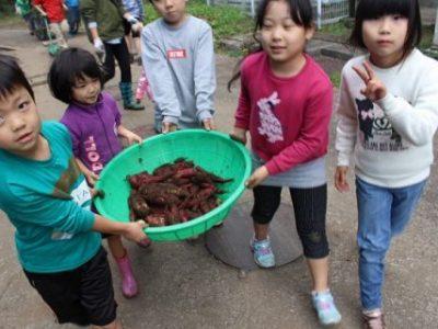 11月14日(木)県民の日 サツマイモ収穫 焼き芋大会(エコクラブ)