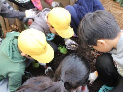 カブトムシの幼虫を発見! 自然サイエンスクラブ 1月16日(木)