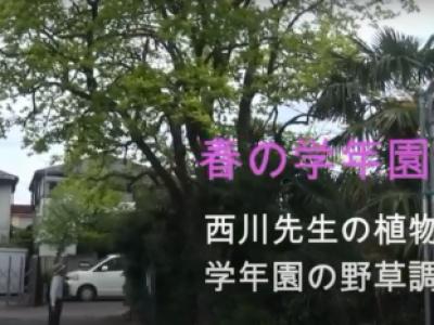 「春の学年園 野草調べ」 西川先生の植物教室②