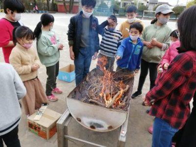 11月24日(月)サツマイモ収穫 ケヤキの木でブランコ遊び(動画掲載・エコクラブ)