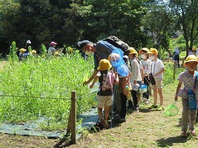 森はいきている 1年生自然観察会7月19日(月)動画、写真集掲載